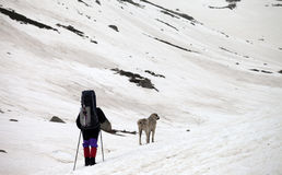 Hiker and dog in snow mountains at spring gray day Stock Photos