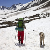 Hiker with dog in snowy mountains at spring Royalty Free Stock Photos