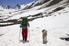 Hiker with dog in snowy mountains at spring Royalty Free Stock Image