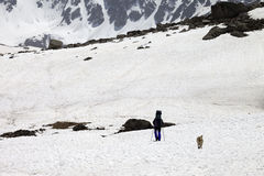 Hiker and dog in snowy mountains at spring Royalty Free Stock Image