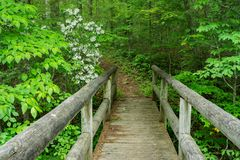 Hiker Footbridge and Mountain Laurel. Hiker footbridge with mountain laurel located in the Jefferson National Forest, Botetourt County, Virginia, USA stock photos