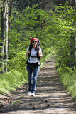 Hiker in forest. Hiker on the road in pine forest Stock Image