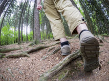 Hiker in the forest Stock Photography