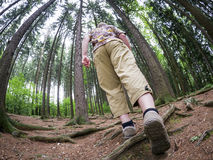 Hiker in the forest Royalty Free Stock Photography