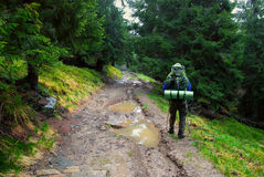 Hiker in forest and puddle on road Stock Photography