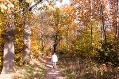 Hiking through a autumn forest royalty free stock image