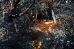 Hiker in a forest. Hiker walks alone in the dense forest during sunny day Stock Photo