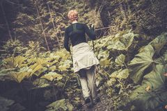 Hiker in a forest Stock Photo