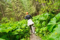 Hiker in a forest Royalty Free Stock Photography
