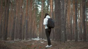 Hiker girl with backpack walking in a pine forest, rear view. Active lifestyle and adventure in wildlife nature. Hiker girl with backpack walking in a pine stock video footage