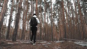 Hiker girl with backpack walking in a pine forest, rear view. Active lifestyle and adventure in wildlife nature. Hiker girl with backpack walking in a pine stock video