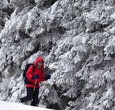Hiker go on slope with new-fallen snow in snow-covered forest stock images