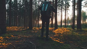 Hiker hiking in forest at sunset stock footage