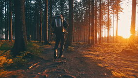 Hiker hiking in forest at sunset stock video footage