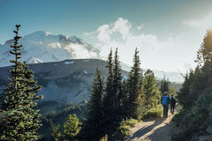 The Hiker Hiking into the Mountain. A hiker is hiking in the field at Wonderland Trail with Mount Rainier in the background, Washington Stock Photography