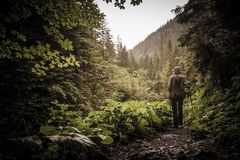 Hiker with hiking poles in a mountain forest Royalty Free Stock Photography
