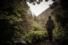 Hiker with hiking poles in a mountain forest Stock Photography