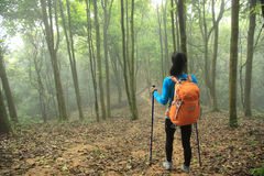 Hiker hiking in spring foggy forest trail Stock Image