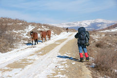 Hiker and horses Royalty Free Stock Photography