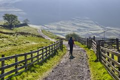 Hiker in Lake District. Rear view of female hiker walking on pathway in Lake District National Park, Cumbria, England Royalty Free Stock Image