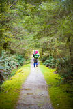 Hiker on lush jungle trail with dirt pathway on Milford Track in Stock Image