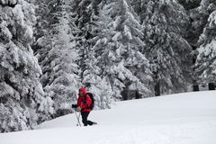 Hiker makes his way on slope with new-fallen snow in snow-covered forest at gray winter day after snowfall. stock photography