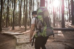 Hiker - man hiking in forest Royalty Free Stock Photography