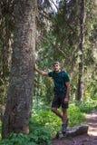 Hiker man in a secular fir firest Stock Image
