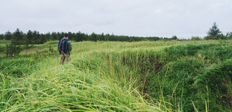 Hiker man walking among high grass in summer Royalty Free Stock Photography