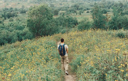 Hiker man walking through a meadow of wildflowers Stock Photography