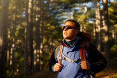 Hiker man walks in a pine yellow autumn forest. Backpacker enjoys fall landscape. Tourist wears sport sunglasses. Royalty Free Stock Image
