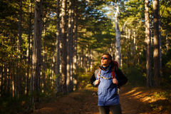Hiker man walks in a pine yellow autumn forest. Backpacker enjoys fall landscape. Tourist wears sport sunglasses. Stock Photography