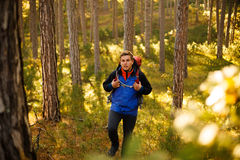 Hiker man walks in a pine yellow autumn forest. Backpacker enjoys golden fall landscape and lloks to the camera. Stock Photos