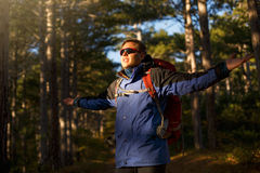 Hiker manin sunglasses walks in a pine yellow autumn forest. Backpacker enjoys golden fall landscape. Tourists spreads Royalty Free Stock Images