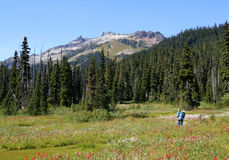 Hiker in Meadows of Callaghan Valley Stock Photo