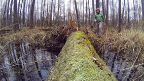 Hiker passes through a stream on a log. stock video