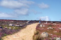 North Yorkshire Moors Hiker. A hiker on pathway through the north yorkshire moors, showing the purple heather north of Bolton Abbey, North Yorkshire. UK Stock Photography