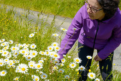 Hiker picking daisies in a meadow Royalty Free Stock Photography