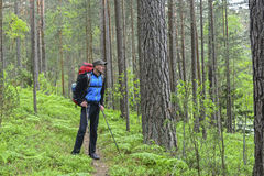 Hiker in a pine forest Royalty Free Stock Photos