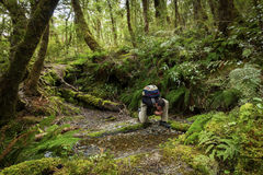 Hiker in pristine New Zealand Royalty Free Stock Photos
