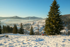 Hiker rests under a fir tree and admiring winter landscape Stock Image