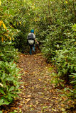 Hiker in a Rhododendron Forest Royalty Free Stock Photos
