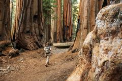 Hiker in Sequoia national park in California, USA stock photo