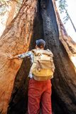 Hiker in Sequoia national park in California, USA. Hiker in Sequoia national park in California. USA stock photos