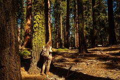 Hiker in Sequoia national park in California, USA. Hiker in Sequoia national park in California. USA royalty free stock photo