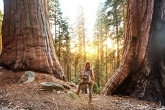 Hiker in Sequoia national park in California, USA. Hiker in Sequoia national park in California. USA royalty free stock photos