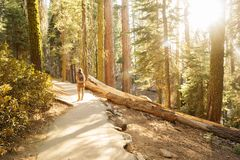 Hiker in Sequoia national park in California, USA. Hiker in Sequoia national park in California. USA stock image