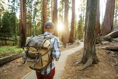 Hiker in Sequoia national park in California, USA. Hiker in Sequoia national park in California. USA stock images