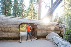 Hiker in Sequoia national park in California, USA. Hiker in Sequoia national park in California. USA stock photo