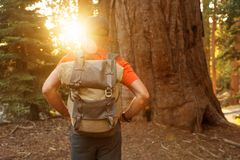 Hiker in Sequoia national park in California, USA.  royalty free stock photography